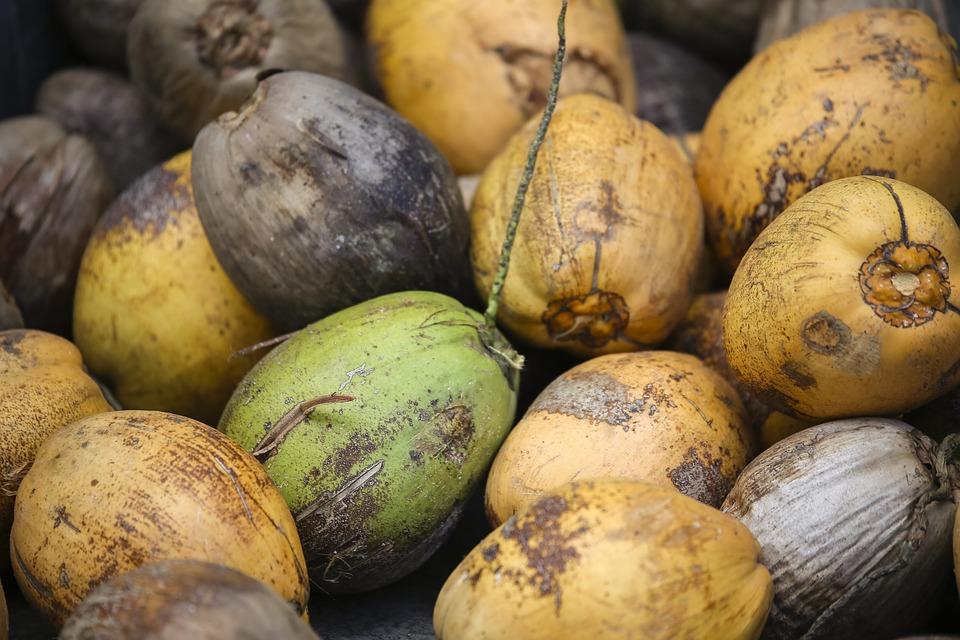 coconut mangezcochons_720