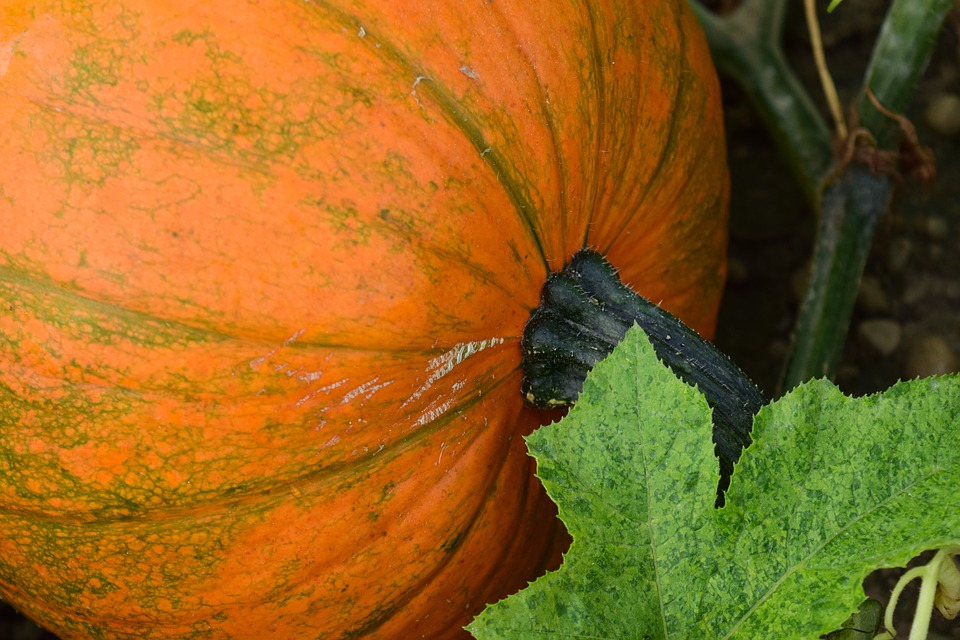 pumpkin-1666444_960_720