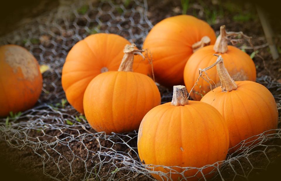 pumpkin-1679827_960_720
