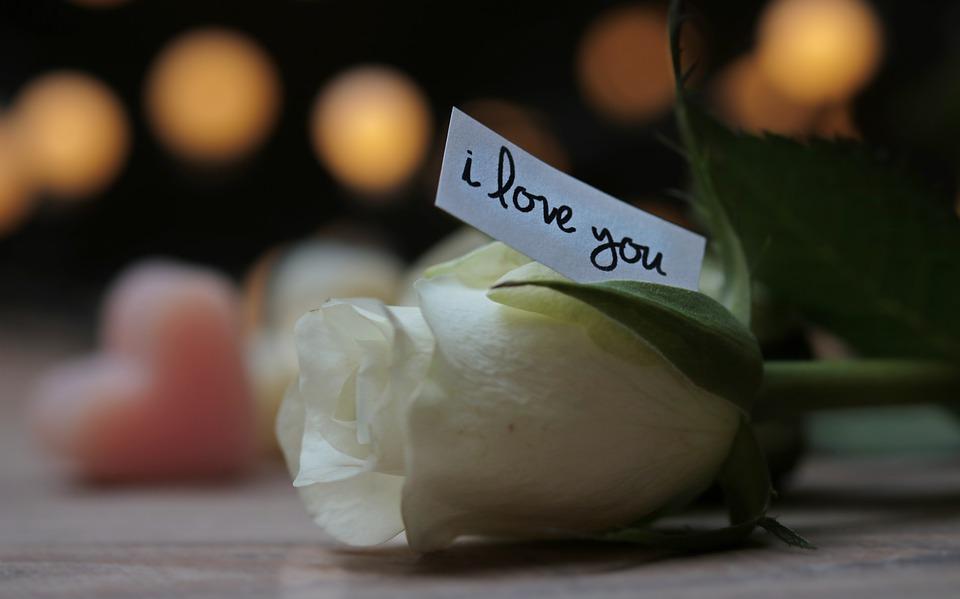 rose-3121249_960_720