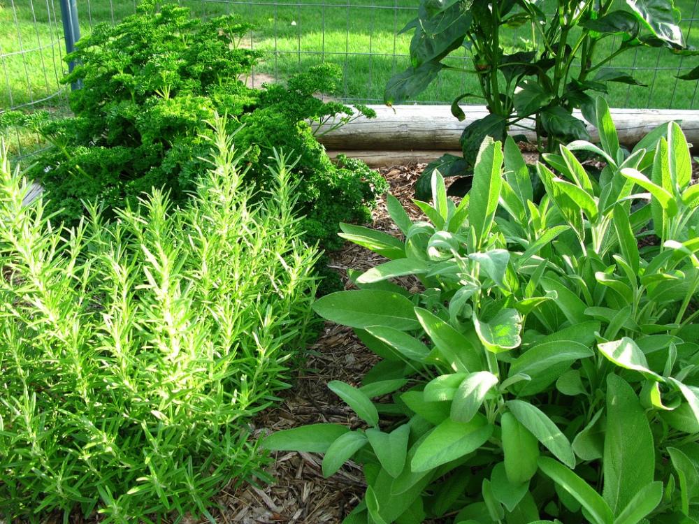 intro-herbe-aromate-persil-romarin-basilic-cueillir-full-12101883