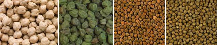 diversite-varietes-pois-chiche-top-semences