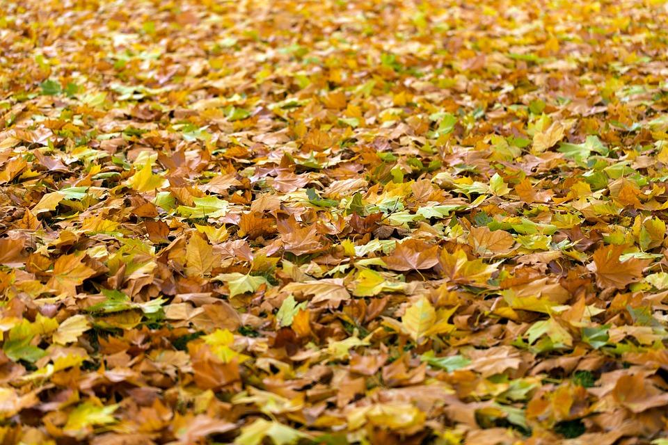 autumn-940401_960_720